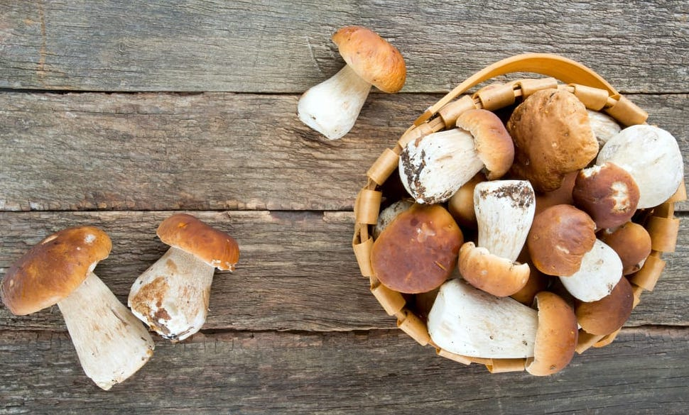 FEAST OF PORCINI MUSHROOMS